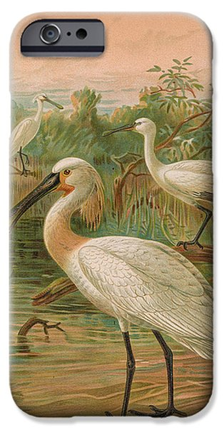 Spoonbill iPhone Cases - Eurasian Spoonbill iPhone Case by J G Keulemans