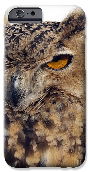 Seagull iPhone Cases - Eurasion Eagle Owl iPhone Case by Skip Willits