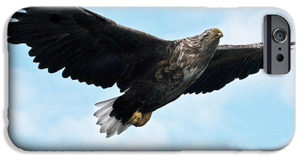 Norway iPhone Cases - European Flying Sea Eagle 7 iPhone Case by Heiko Koehrer-Wagner