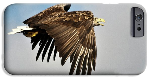 Norway iPhone Cases - European Sea Eagle iPhone Case by Heiko Koehrer-Wagner
