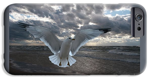 Flying Seagull iPhone Cases - Evening Landing iPhone Case by Ann Horn