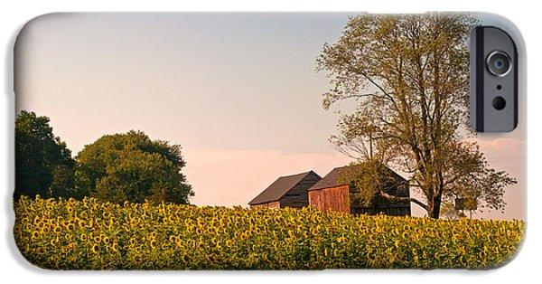 Buttonwood Farm iPhone Cases - Evening on the Sunflower Farm iPhone Case by Nancy  de Flon