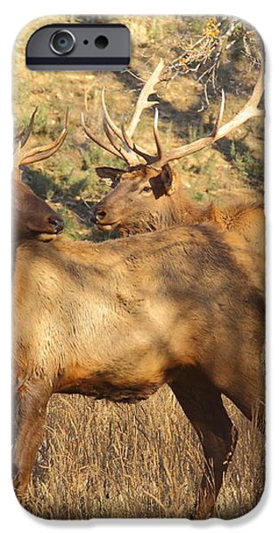 Evening Sets On The Elk iPhone Case by Robert Frederick