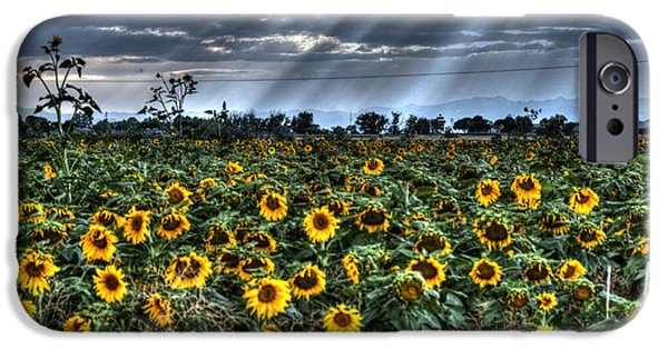 Annual iPhone Cases - Evening Sunbeams on Field of Sunflowers iPhone Case by Juli Scalzi