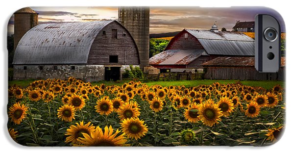 Tennessee Barn iPhone Cases - Evening Sunflowers iPhone Case by Debra and Dave Vanderlaan