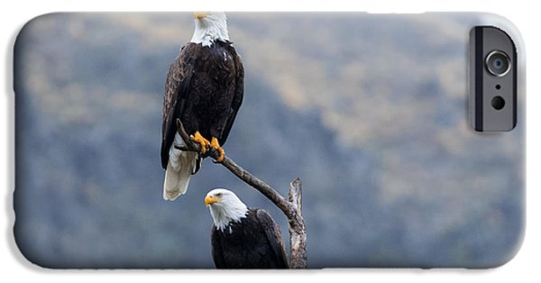 Eagle Photographs iPhone Cases - Ever Watchful iPhone Case by Mike Dawson