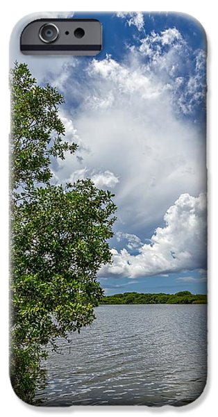 Mangrove Forest iPhone Cases - Everglades 0266 iPhone Case by Rudy Umans