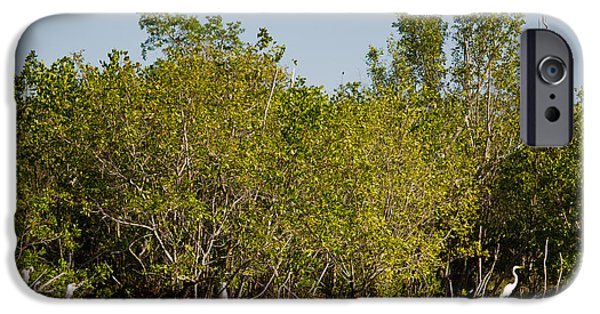 Mangrove Forest iPhone Cases - Everglades  Egrets iPhone Case by Tracy Knauer