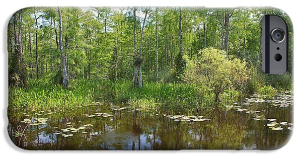 Mangrove Forest iPhone Cases - Everglades Lake iPhone Case by Rudy Umans
