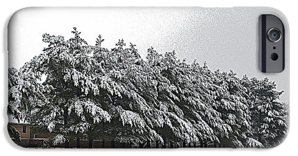 Snowy Day iPhone Cases - Evergreens in Snow iPhone Case by Luther   Fine Art