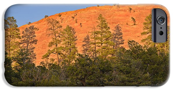 Scenic Drive iPhone Cases - Every Tree in Its Shadow iPhone Case by Christine Till