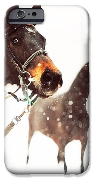 Everyone Has a Dream iPhone Case by Jenny Rainbow