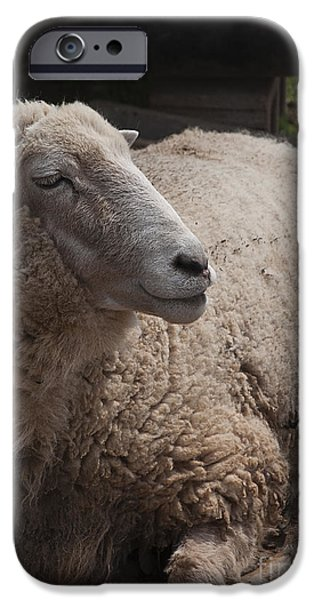 Soulful iPhone Cases - Ewe iPhone Case by Terry Rowe