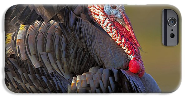 Best Sellers -  - Eastern Wild Turkey iPhone Cases - Excitable iPhone Case by Jack Milchanowski