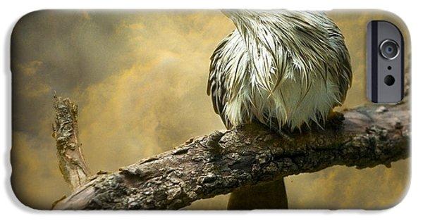 Cuckoo iPhone Cases - Exotic Bird - Guira Cuckoo Bird iPhone Case by Gary Heller