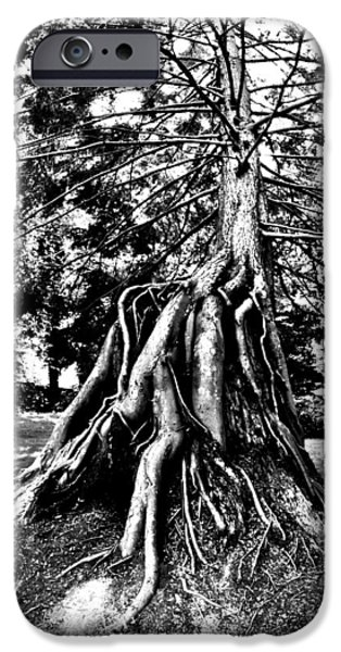 Tree Roots Photographs iPhone Cases - Exposed iPhone Case by Benjamin Yeager