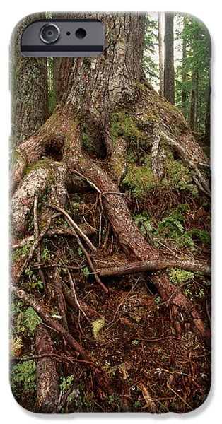 Tree Roots iPhone Cases - Exposed Rain Forest Roots iPhone Case by Tracy Knauer