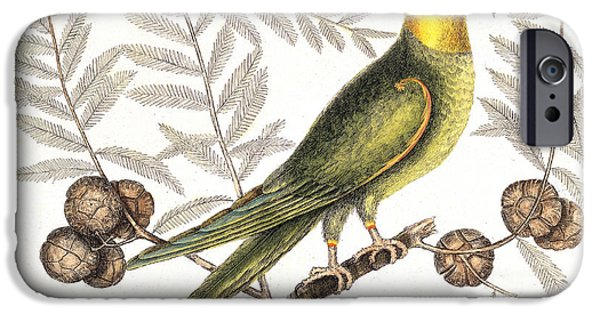 Tree Art Print iPhone Cases - Extinct Carolina Parakeet, 1731 iPhone Case by Wellcome Images