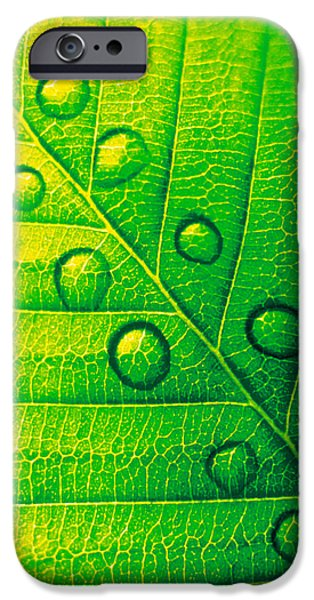 Indoor Still Life iPhone Cases - Extreme Close Up Of Leaf Vein iPhone Case by Panoramic Images