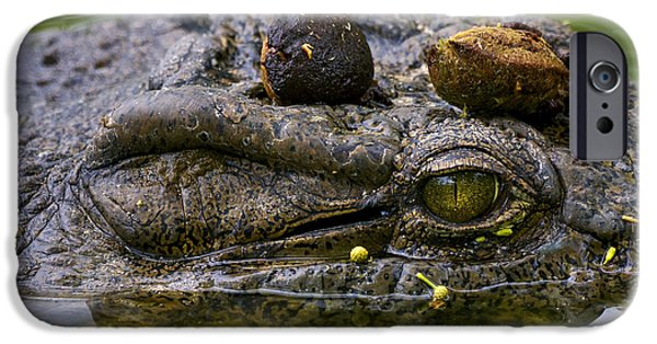 River View iPhone Cases - Eye Of Crocodile iPhone Case by Luca Mason