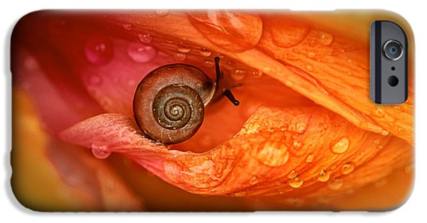 Floral Photographs iPhone Cases - Eye of Nature iPhone Case by Janet Pancho Gupta