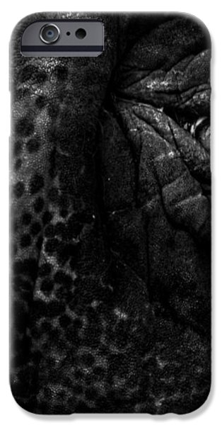 Eye of the Elephant iPhone Case by Bob Orsillo