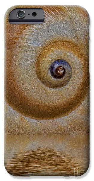 Marine iPhone Cases - Eye of the Snail iPhone Case by Susan Candelario