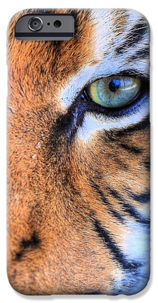 Recently Sold -  - The Tiger iPhone Cases - Eye of the Tiger iPhone Case by JC Findley