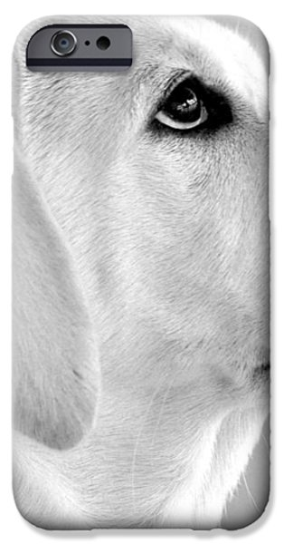 Eye on the Ball iPhone Case by Kristina Deane