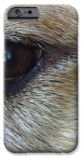 Eye See You iPhone Case by Lisa  Phillips