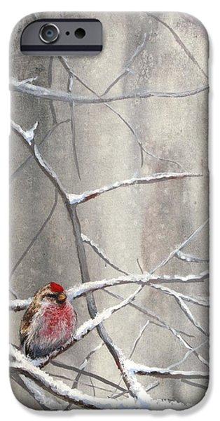 Crossbill iPhone Cases - Eyeing The Feeder Alaskan Redpoll In Winter iPhone Case by Karen Whitworth