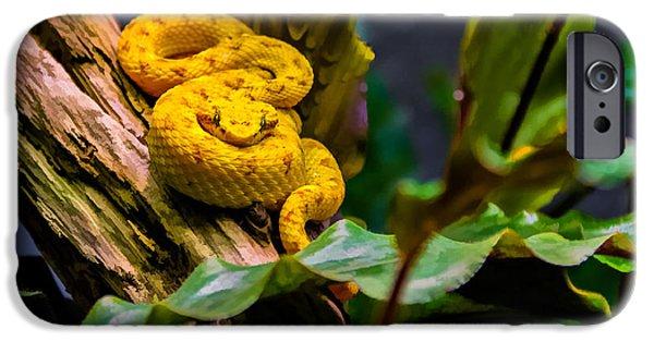 Serpent iPhone Cases - Eyelash Viper 2 iPhone Case by Steve Harrington