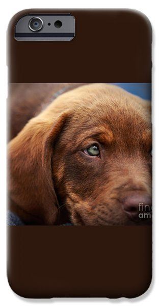 Eyes are the window to the soul iPhone Case by Mary Lou Chmura