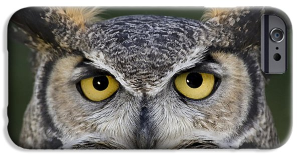 Animals Photographs iPhone Cases - Eyes for you iPhone Case by Wildlife Fine Art