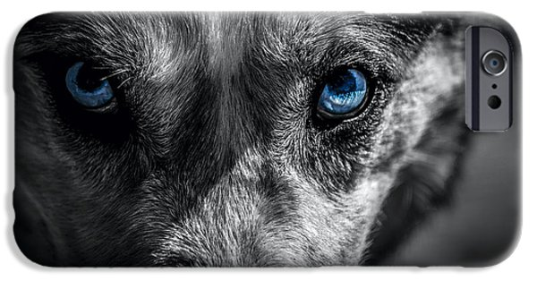 Husky iPhone Cases - Eyes in the Darkness iPhone Case by David Morefield