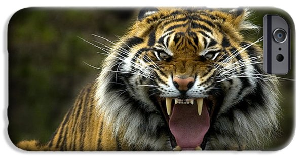 Wildlife Photographs iPhone Cases - Eyes of the Tiger iPhone Case by Mike  Dawson