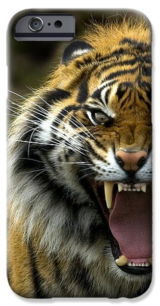 Eyes of the Tiger iPhone Case by Mike  Dawson