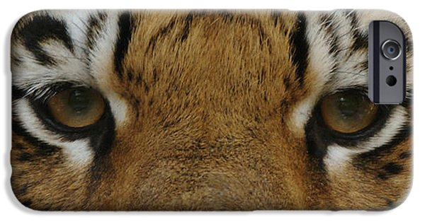 Eye Of The Tiger iPhone Cases - Eyes of the Tiger iPhone Case by Sandy Keeton
