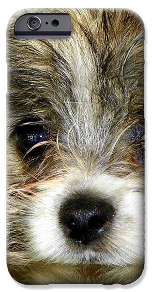 Eyes on You iPhone Case by KAREN WILES