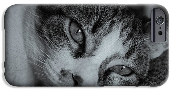 Pictures Of Cats Photographs iPhone Cases - Eyes iPhone Case by Raymond Collins