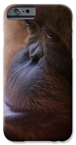 Orangutan iPhone Cases - Eyes iPhone Case by Shane Holsclaw