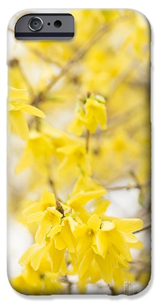 Wintertime iPhone Cases - Fabulous Forsythia iPhone Case by Anne Gilbert