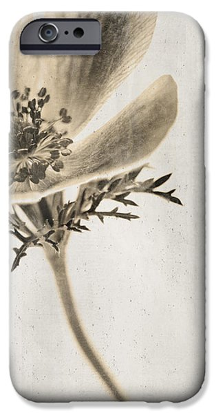 Sepia Flowers iPhone Cases - Faded Memory iPhone Case by Caitlyn  Grasso