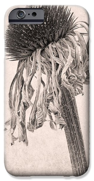 Sepia Flowers iPhone Cases - Faded Star iPhone Case by Marion Galt