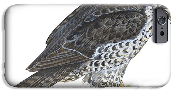 Falcon iPhone Cases - Falcon iPhone Case by Anonymous