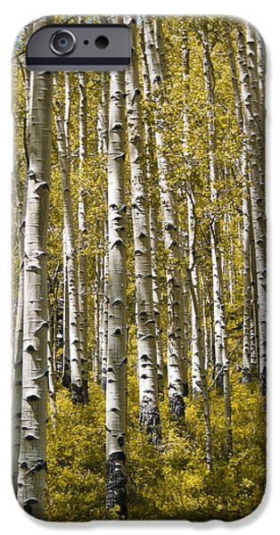Fall Aspens iPhone Case by Adam Romanowicz