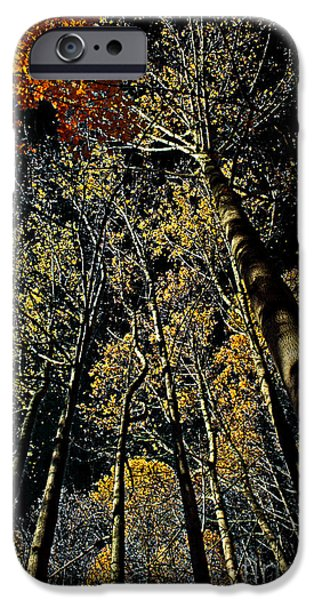 Interior Scene iPhone Cases - Fall at Night iPhone Case by Tom Gari Gallery-Three-Photography