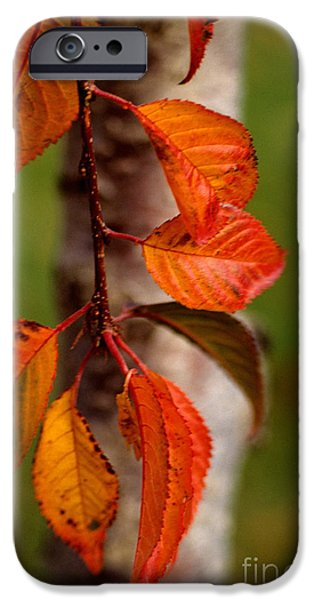 Fall Beauty iPhone Case by Sharon Elliott