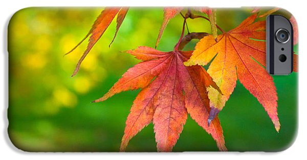 Fall iPhone Cases - Fall Color iPhone Case by Jeff Klingler