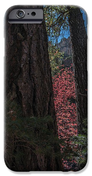 West Fork iPhone Cases - Fall Color Perspective iPhone Case by Tam Ryan